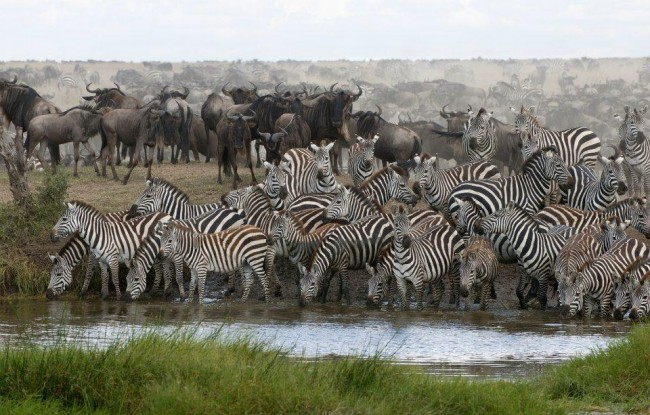 wildbeest-migration-3_1_6.jpg