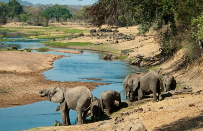 elephants_in_the_great_ruaha_river_5_2.jpg